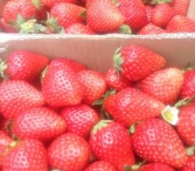マルシェ、BASE、イチゴ、苺